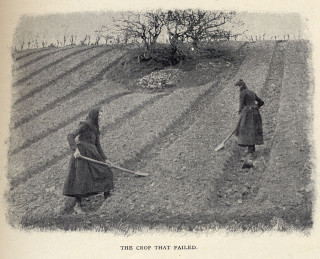 Example of the digging and creation of lazy-beds