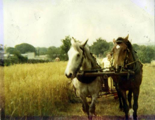 Harvesting in Lemonfield