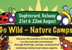 Go Wild Nature Camp, Oughterard Courthouse