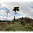 The Connemara Railway Photography Project