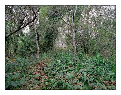 Wild garlic on the railway line at Ballynahinch   Courtesy of Lorraine Tuck / collection of works made along the old Galway Clifden railway line