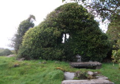 The Serpent in the Churchyard