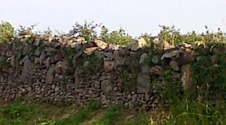 Example of feídin wall with prominent 'through stones' in Moyvoon