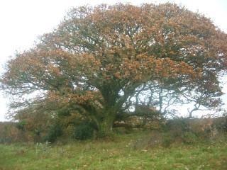 Cillin at Glengowla and Keogh's Bog