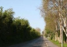 Ancient Road to Casla