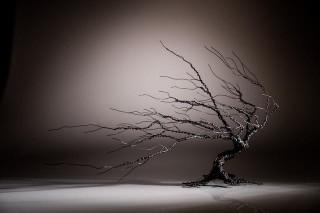 Windswept Tree from Glenn Gibson's